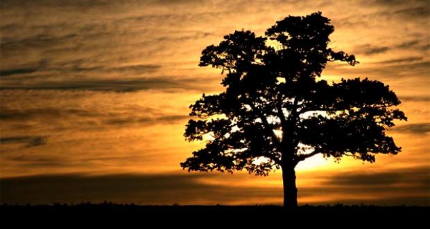 A bölcs, és a fán rekedt ember tan mese