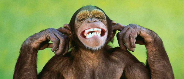 A szemtelen majom története.